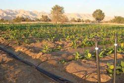افتتاح ۷۹ پروژه بخش کشاورزی در مازندران