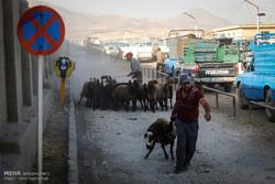 نظارت ۴۶ تیم بهداشتی در خوزستان بر نذورات عید قربان