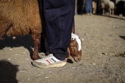 بەڕێوەچوونی ڕێوڕەسمی قوربانی کردن لە ١٠٠ گوندی پارێزگای کوردستان