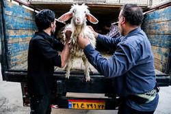 ذبح ۴۶ راس گوسفند و توزیع آن در منطقه خزامی کارون