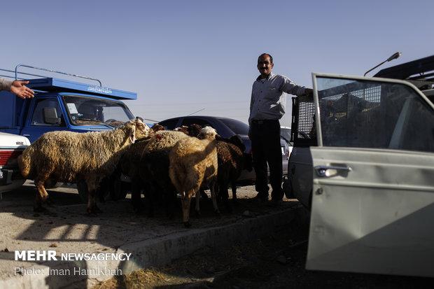 بازار فروش دام در آستانه ی عید قربان
