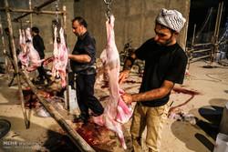 ۱۰۰ راس گوسفند در شهرستان سپیدان قربانی شد