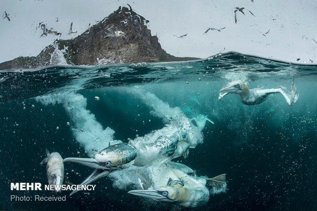 تصاویر برگزیده مسابقه سالانه عکاسی پرندگان 2018
