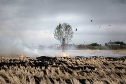 آتش در خرمن محیط زیست