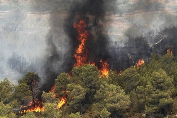 Forest fires kill, injure 10 people in Marivan