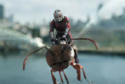 مورچهایها نیم میلیاردی شدند/ استقبال از فیلم در چین
