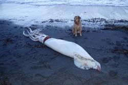 لاشه ماهی ۴.۵ متری در سواحل نیوزلند کشف شد