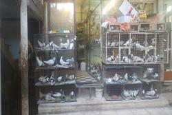 استمرار زندهفروشی پرندگان در بازار همدان/طرحهایی که راهگشا نیست