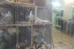 زندهفروشی پرندگان در بازار همدان ادامه دارد