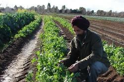 رکورد زنی هند در تولید محصولات کشاورزی