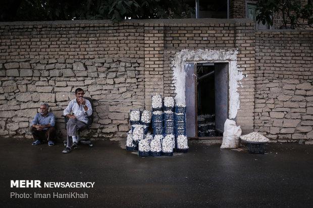 جشنواره سیر و موسیر سولان همدان