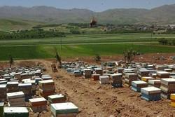 ۹۵۰۰ کلنی زنبور عسل در شهرستان بهار موجود است