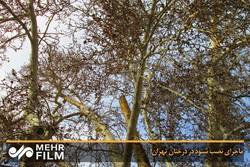 پاسخ به ادعای نصب شنود در درختان تهران!