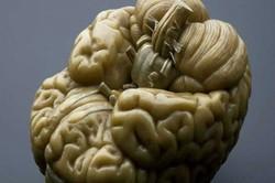 سمپوزیوم تازههای نقشهبرداری مغز برگزار می شود