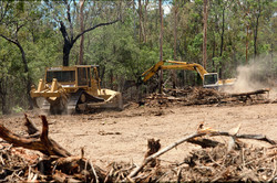 Great concerns as bulldozers tearing down forest for building roads