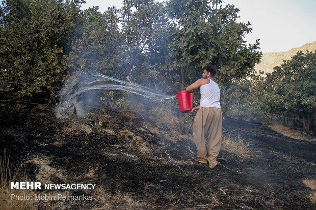 جنگل های مرگ در آتش سوخت