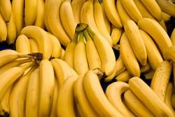 واردات میوه کره جنوبی رکورد ۱.۲ میلیارد دلار را ثبت کرد