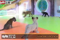 فلم/ بیجنگ کے چڑیا گھر میں حیوانات کے بچوں کی دیکھ بھال کا مرکز