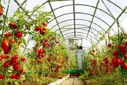 شهرکهای گلخانهای توسعه مییابد