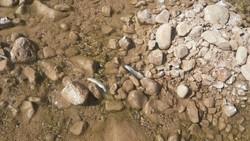 مرگ ماهیان رودخانه «چولهول» پلدختر
