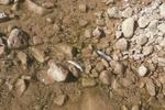 کاهش اکسیژن محلول درآب وافزایش جلبک ها عامل مرگ ماهیان زریوار است