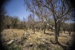 باغات بام ایران در حال خشک شدن/ آب دهی قنات ها ۶۰ درصد کاهش یافت