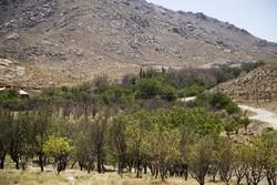 خسارت کم آبی به باغات چهارمحال و بختیاری