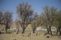 ۸۰ درصد باغات چهارمحال و بختیاری دچار خسارت شده است