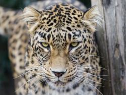 Leopards spotted for first time in Bakhtegan national park