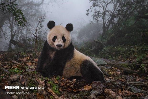 نمایشگاه بهترین تصاویر حیات وحش