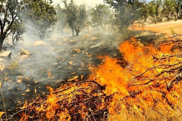 رئیس سازمان آتشنشانی همدان عنوان کرد: وقوع 11 مورد حریق مراتع و پوشش گیاهی طی یک روز در همدان