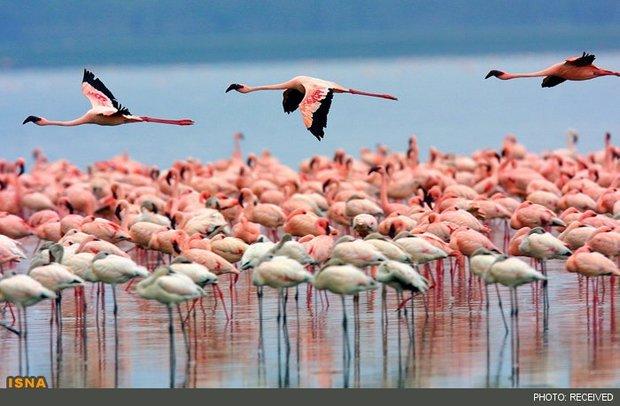 Lake Urmia full restoration deferred pending budget allocation