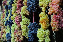 تولید ۱۸۰ هزار تن انگور در استان زنجان