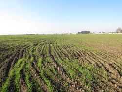کشاورزان کردستانی در انجام کشت پاییزه تعجیل کنند