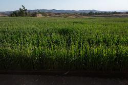 کشورهای (OECD) سالانه ۳۱۷میلیارد دلار از بخش کشاورزی حمایت می کنند