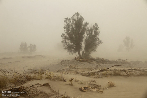 Hamoun dryness, a tragedy for southwestern Iran