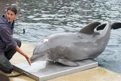 Dünyanın bilinen en yaşlı yunusu Moby öldü
