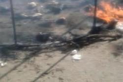ماجرای ویدئوی دردناک «سوزاندن کبوترهای تعزیه» چه بود؟