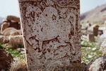 سنگمزارهایی که تابلویی رنگارنگ هستند/ «خاموشان» در خطرند