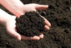 افزایش ۱۰ تا ۲۰ درصدی محصولات کشاورزی با کودهای زیستی