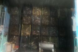 کشف بیش از ۲۵۰ تن ماهی وارداتی در شهرستان البرز