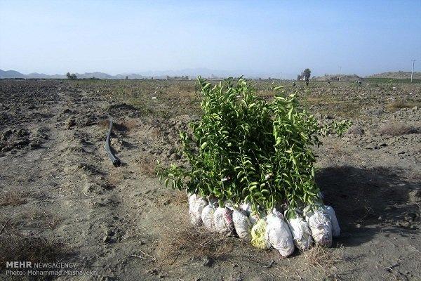 Judge sentence poachers to plant trees