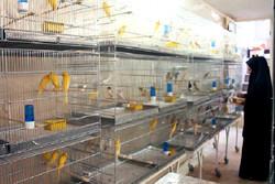 پرورش پرندگان زینتی با استفاده از تسهیلات کمیته امداد