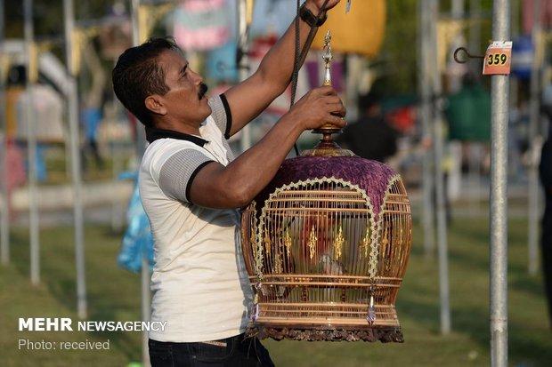 مسابقه آوازخوانی پرندگان در تایلند
