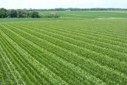 سرمایه گذاری در بخش کشاورزی وجود ندارد/لزوم ایجاد بسته های تشویقی