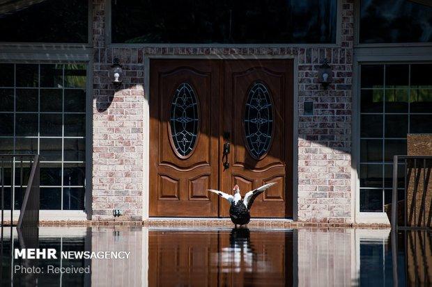 ABD'deki sel felaketinden görüntüler