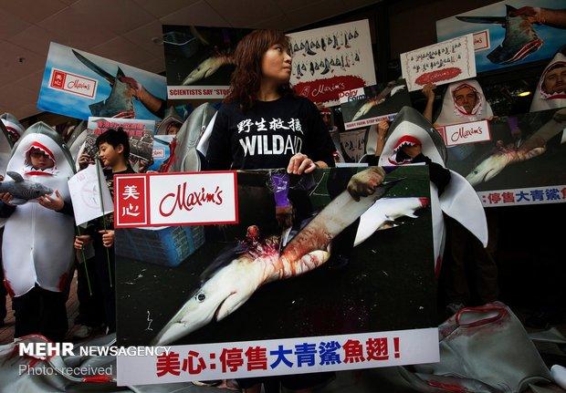 حذف کوسه از منوی رستوران های هنگ کنگ