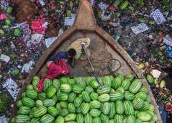 برندگان مسابقه عکاسی بین المللی گیوم