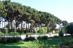امسال ۶۰ هزار متر مربع فضای سبز در سنندج احداث می شود