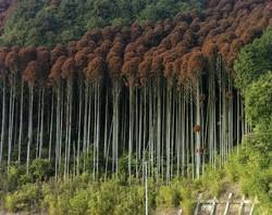 زیبایی درختان